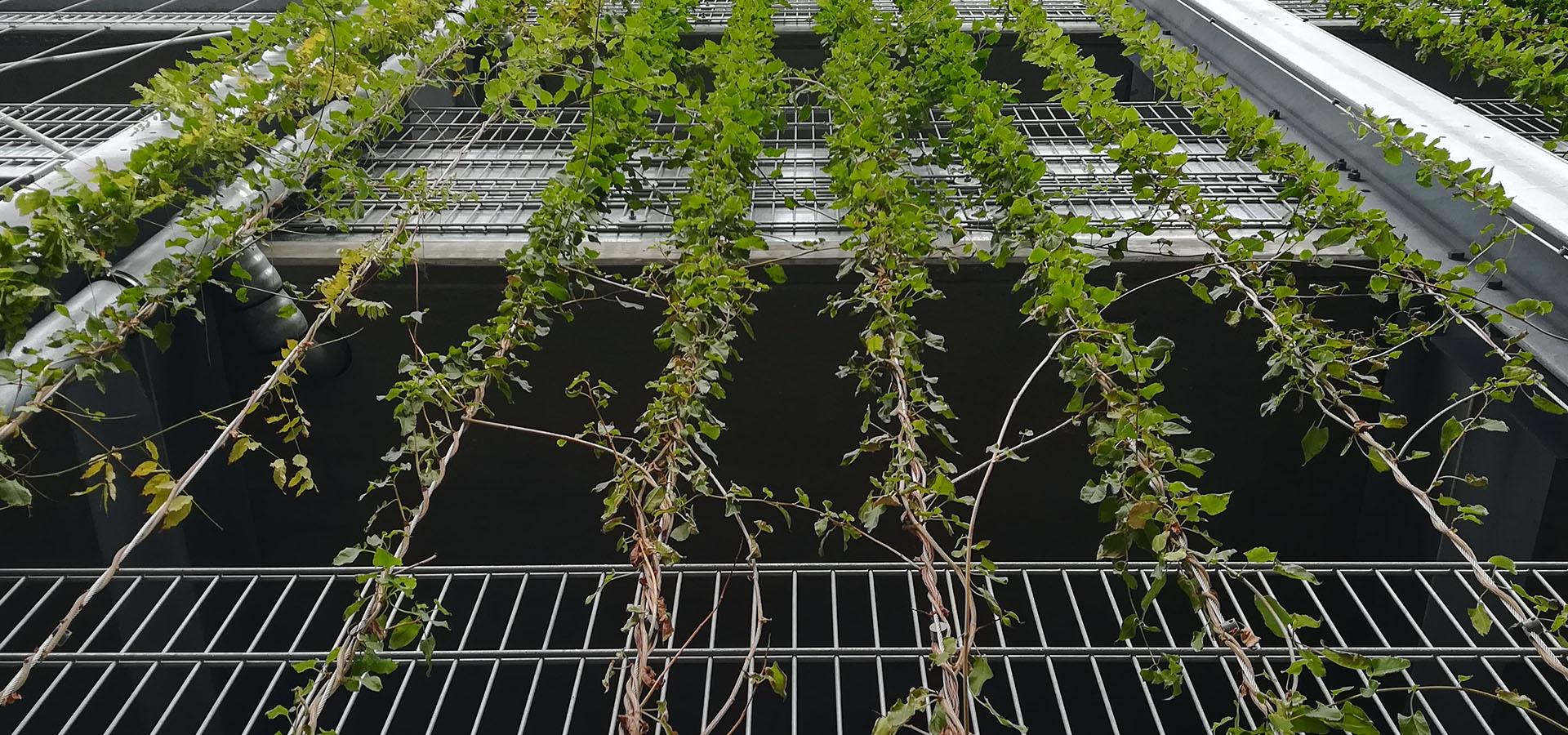 Havearbejde ⇒ Lokal havehjælp Ørestad